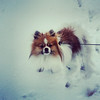 Lacy Matthews submitted this photo via Facebook of Milo enjoying the snow!