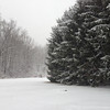 Diane Hoffman, community engagement editor at The Mercury, submitted this photo of snow in West Vincent.
